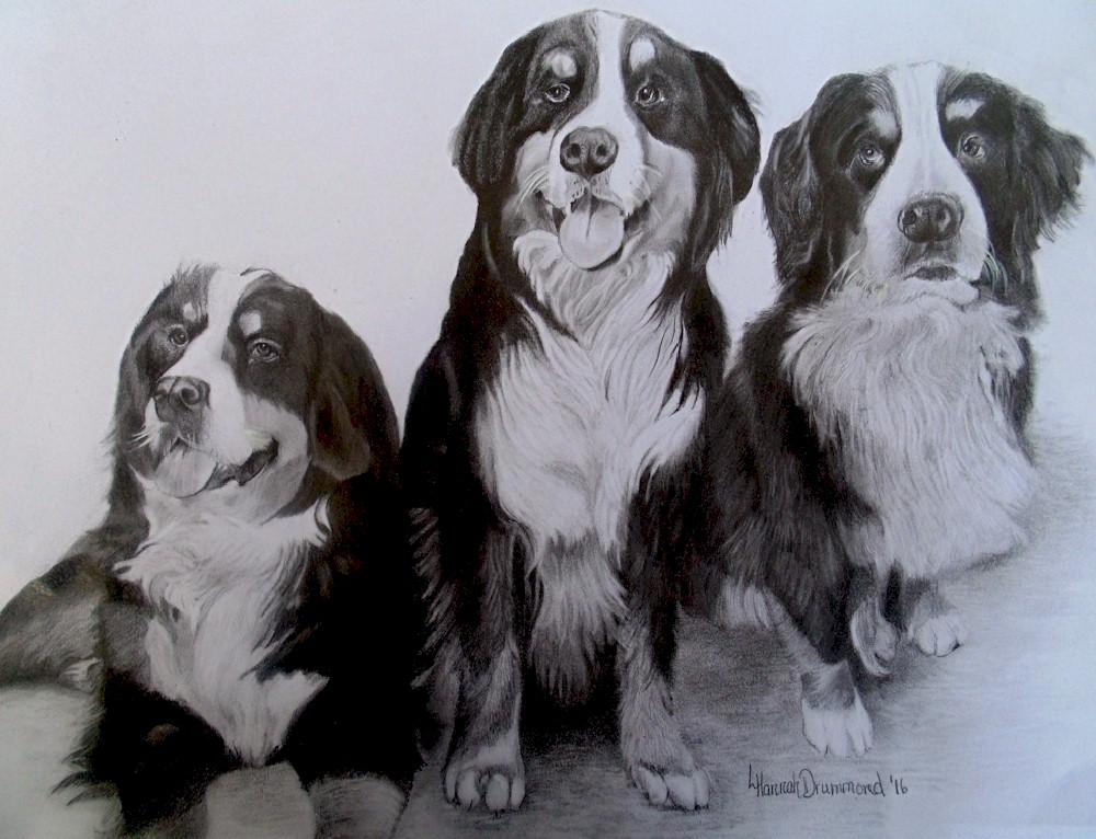 Bernese Mountain Dog Portrait 3