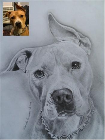 Dog Portraits 10