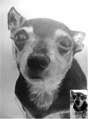 Dog Portraits 11