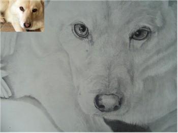 Dog Portraits 30