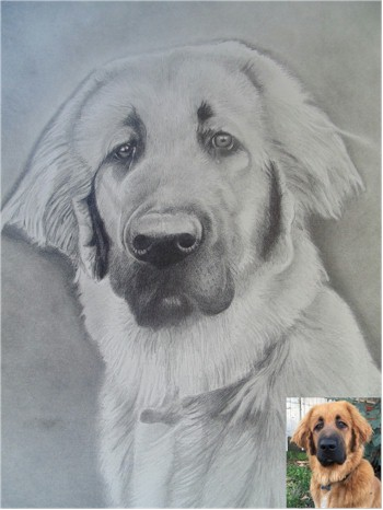 Dog Portraits 8