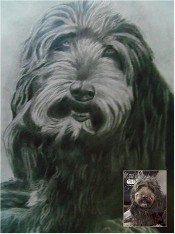 Dog Portraits 9