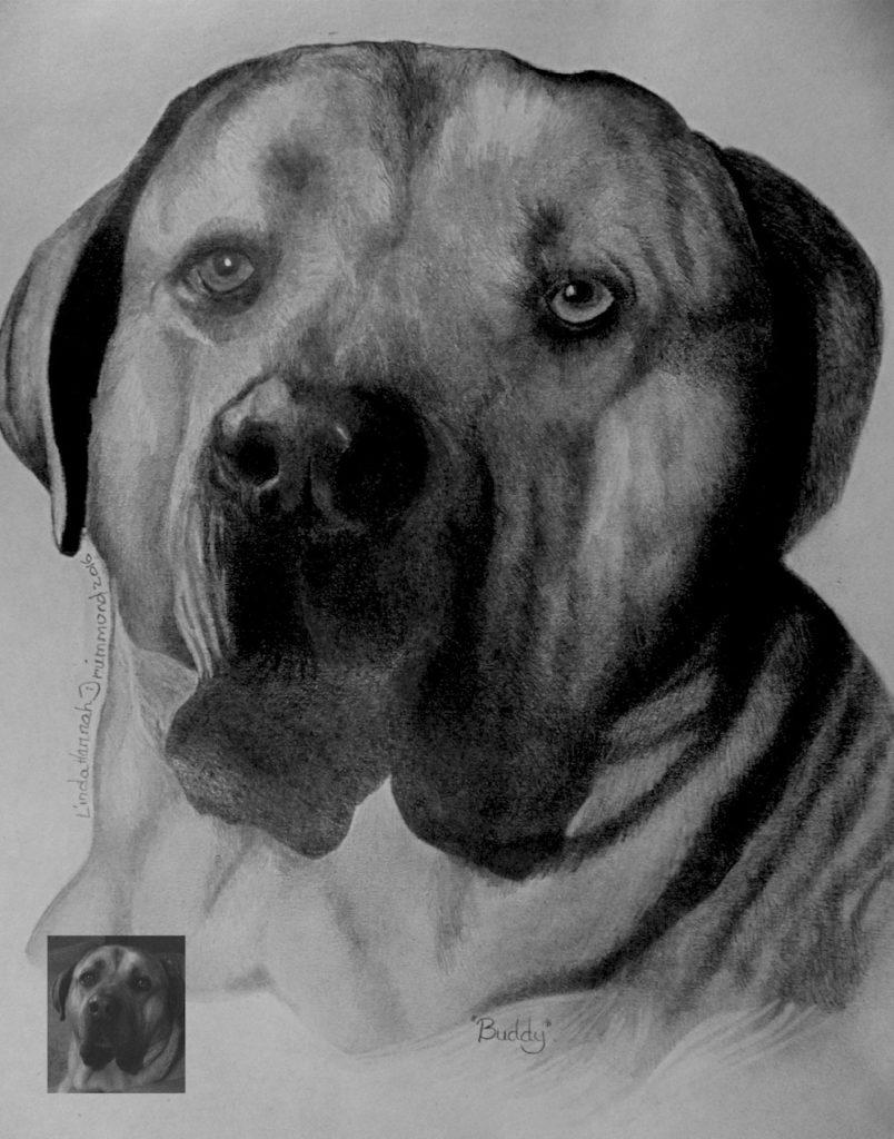 Bullmastiff Portrait