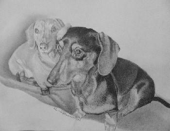 Dog Portraits 38