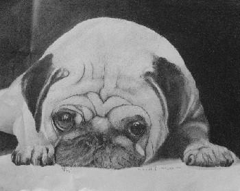 Dog Portraits 39