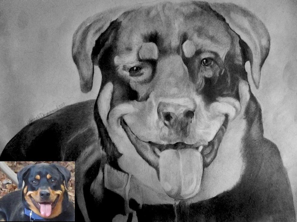 Rottweiler Portraits 12