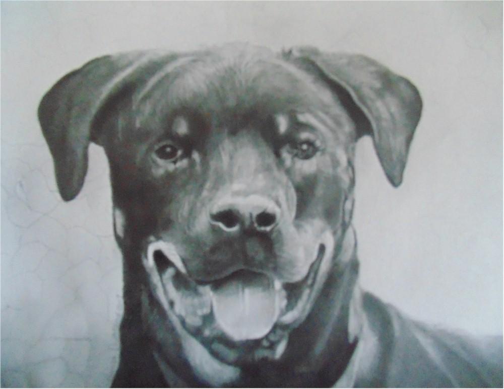 Rottweiler Portraits 1