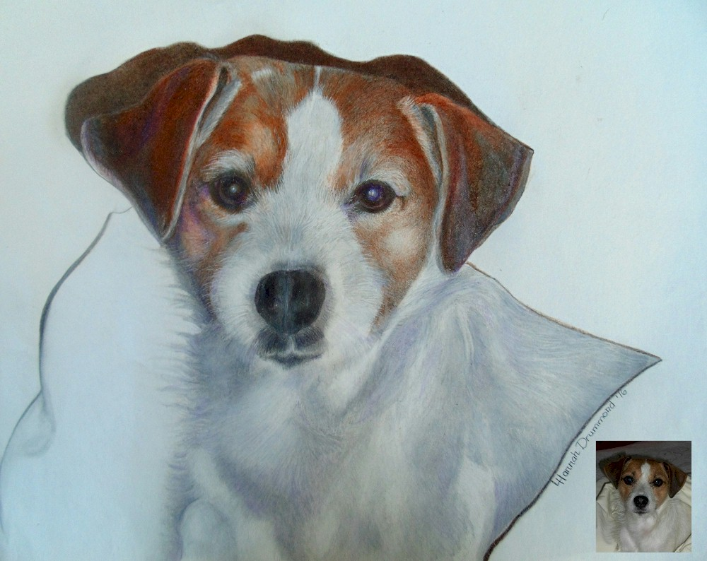 Portrait Drawing of Dog in Colored Pencil 2